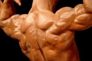 عضلة الكتف